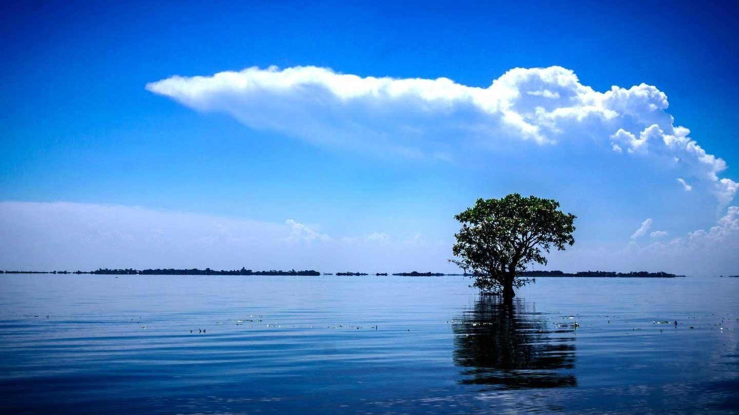 Solitary tree at Tanguar Haor with sky reflecting of the Haor