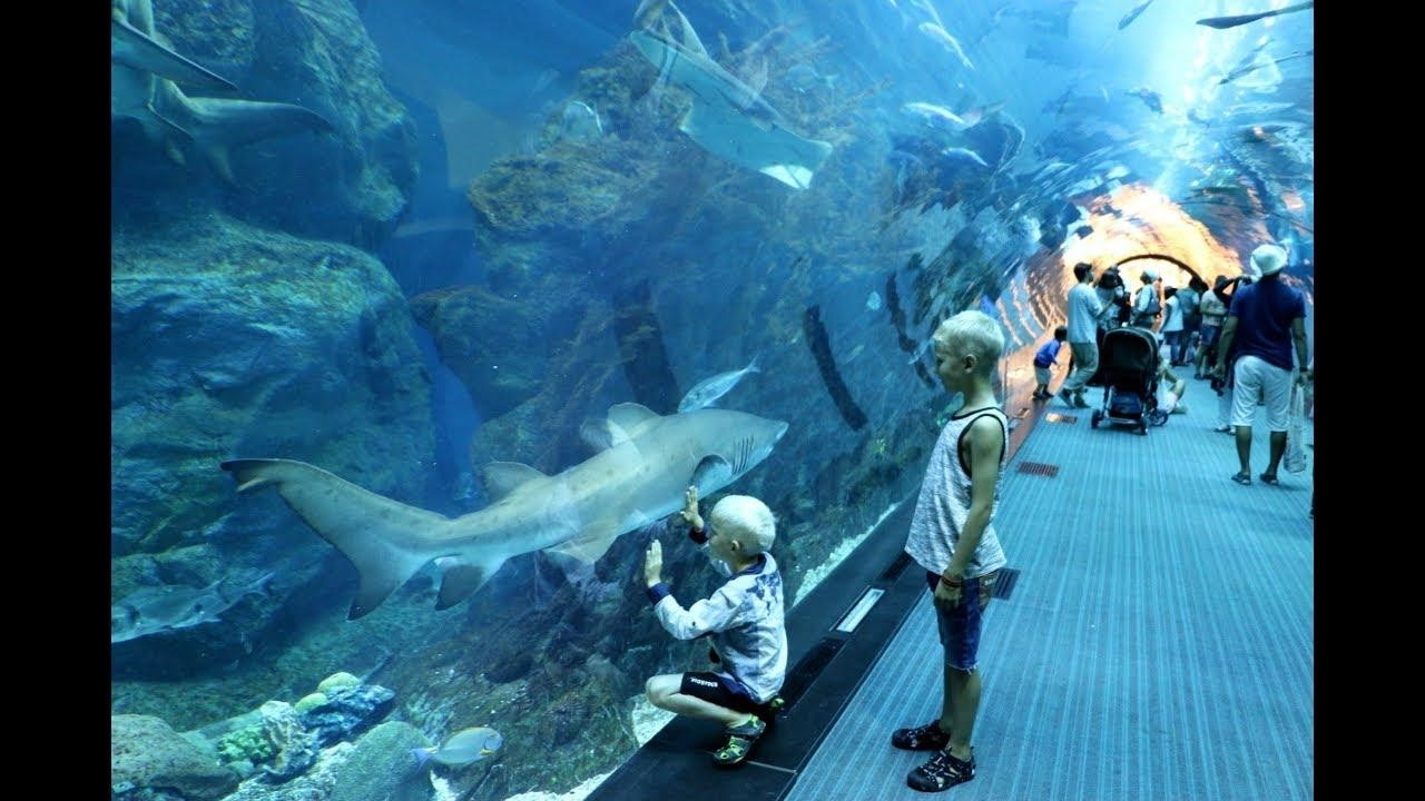 Children admiring Fish in walk through tank