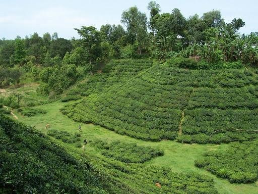 Best 5 places to visit in Sylhet | Sylhet Travel Guide 2021