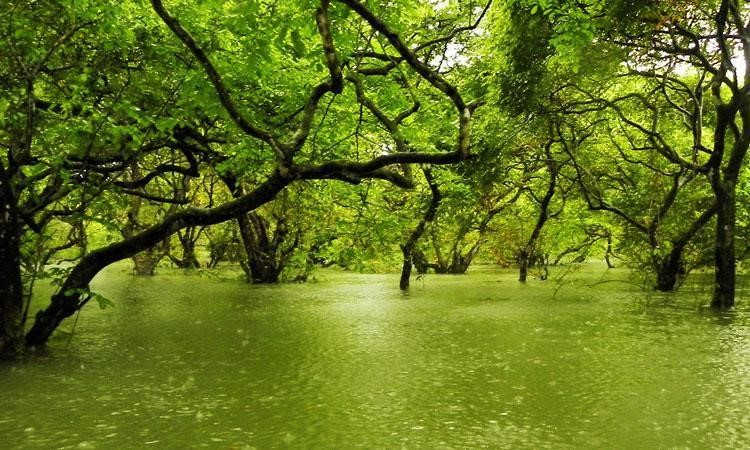 Trees at Ratargul growing out of the water